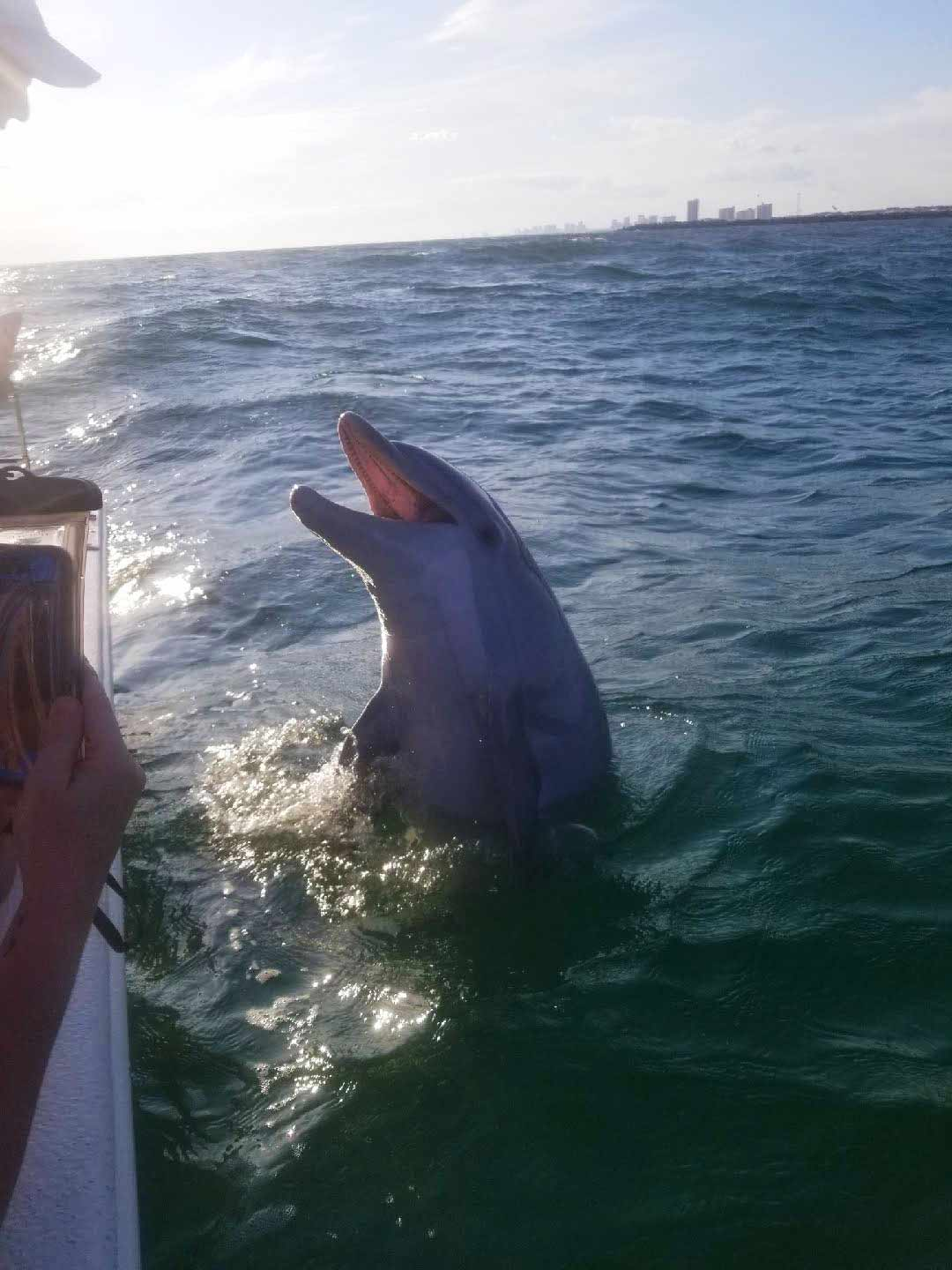 Image of dolphin at the side of a boat talking to the boat's captain