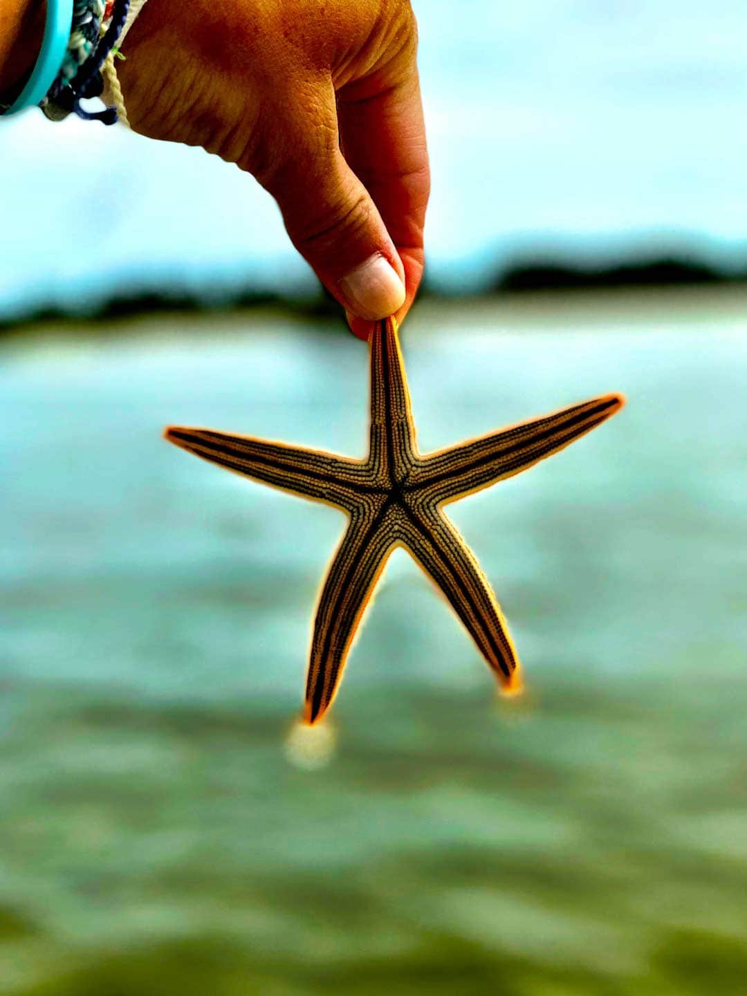 Image of woman's hand holding a starfish