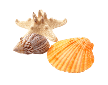 Isolated photo image of seashells and starfish from Shell Island