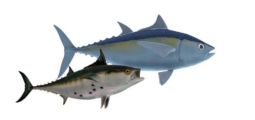 3D rendering of big fish