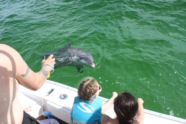 Dolphin swimming along side of Pontoon boat while the kids look on
