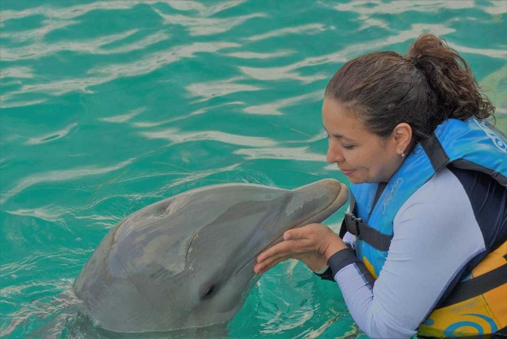Image of a bottlenose dolphin with marine biologist