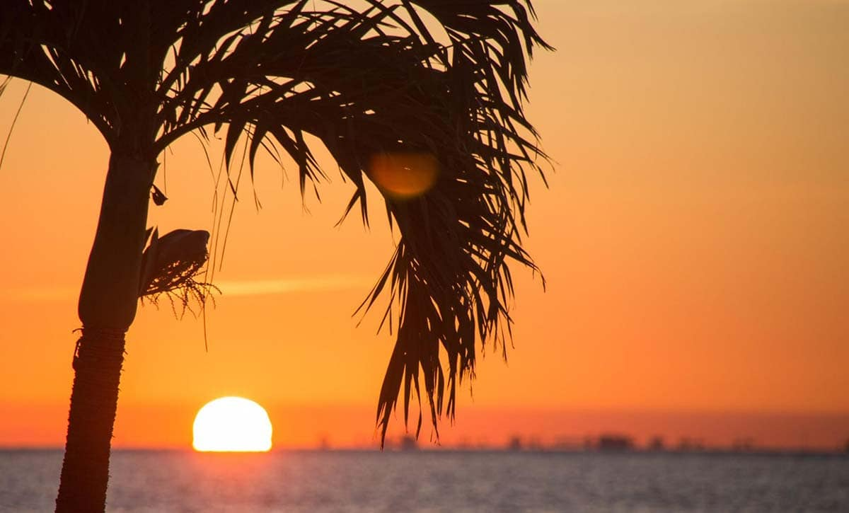 Photo of sunset over the ocean with a Palm Tree in the foreground. The sky is a beautiful color orange.