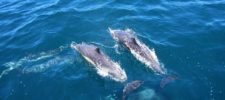 Everything You Want to Know About Bottlenose Dolphins