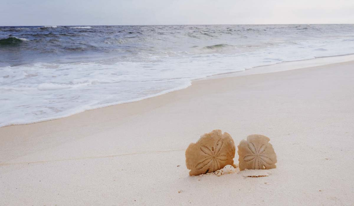 Image of two sand dollars in the sand at Shell Island. The water is calm and the beach is serene.