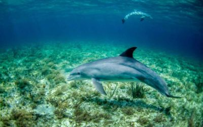 5 Best Shell Island Dolphin Tours and Experience