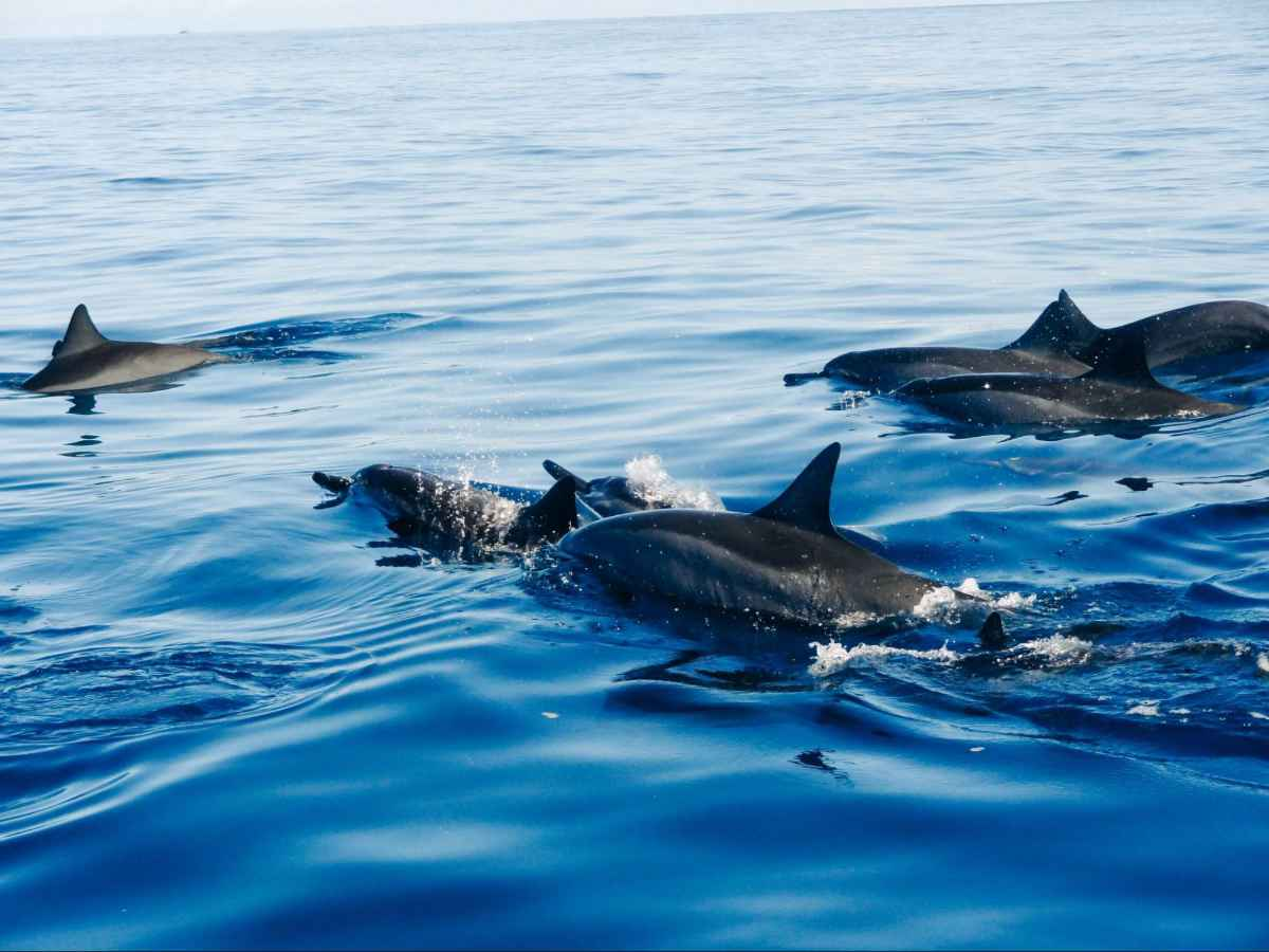 Pod of marine animals swimming in the ocean.